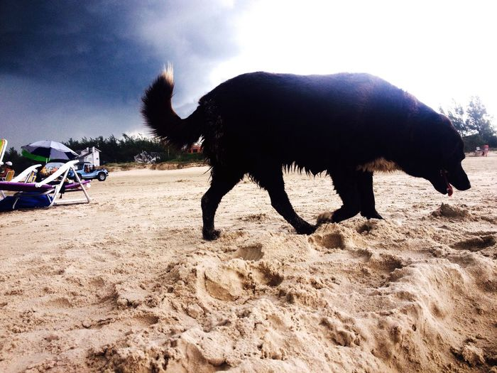 One Animal Beach Nature Sky Photography IPhoneography