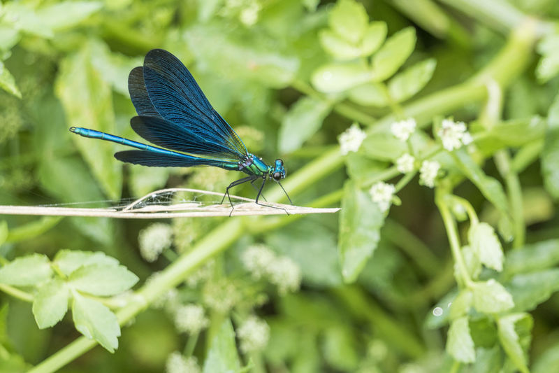 Prête pour l'envol Summertime Beauty In Nature Nature_collection Nature Photography Green Color Blue Perching Insect Flower Animal Themes Close-up Plant Green Color Dragonfly