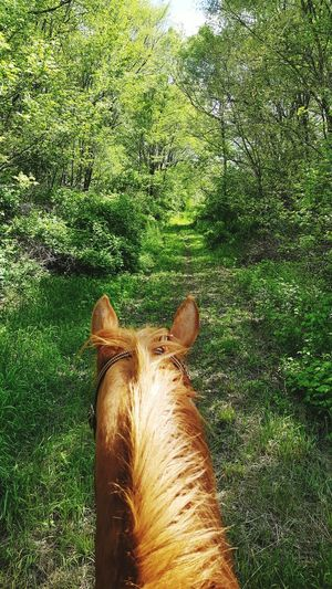 Horse Photography  Trail Ride Love Horse