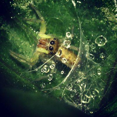 My home. Spider Spiderworld Ig_spider Tgif_macro igglobalclubmacro