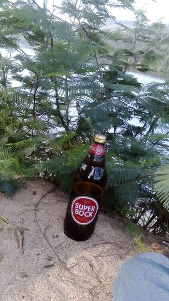 Super Bock Tree Day Nature Beauty In Nature Freshness Outdoors