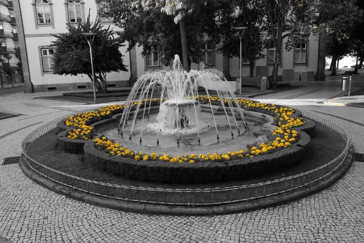 Beja - Portugal City Streetphotography Flowers Yellow Flower Yellow Paint The Town Yellow
