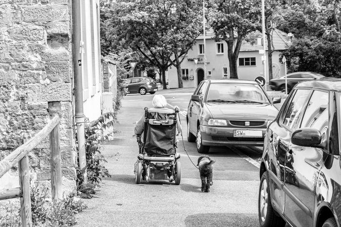 Architecture Black Black And White Blackandwhite Built Structure Casual Clothing Cat City City Life Day Dog Grandma Land Vehicle Leisure Activity Lifestyles Mode Of Transport Outdoors Q Street Street Photography Streetphoto_bw Streetphotography The Way Forward Weelchair