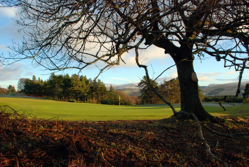 Gleneagles Golf Course Bare Tree Beauty In Nature Branch Day Field Golf Golf Course Grass Growth Landscape Nature No People Outdoors Putting Green Scenics Sky Tranquil Scene Tranquility Tree