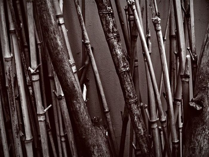 Full Frame Day No People Outdoors Close-up Nature Dried Plant Wood Grain Wood - Material Duotone Timber Bamboo Canes