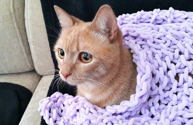 Rita❤ Cat Mycat Cats Of EyeEm Cat Photography No Edit/no Filter Pets One Animal Animal Themes Domestic Animals Domestic Cat Close-up Indoors  Animal Head  Feline Beautiful
