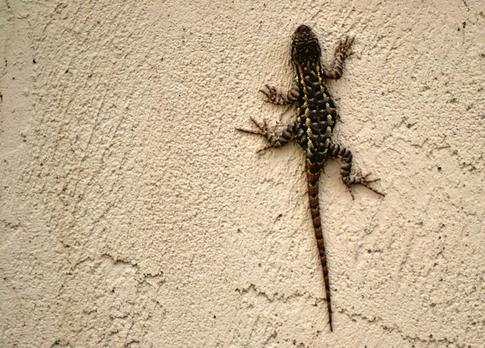 Animal Themes Animals In The Wild One Animal Animal Wildlife Insect No People Nature Close-up Day Outdoors Lizard