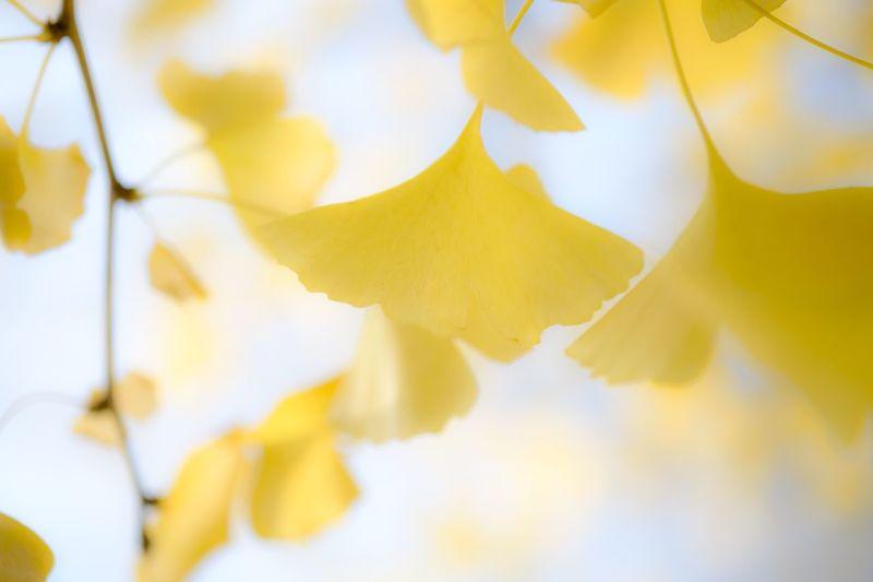 Kitakyushu Fujifilm_xseries EyeEm Best Shots EyeEm Gallery EyeEm Nature Lover Yellow Plant Beauty In Nature