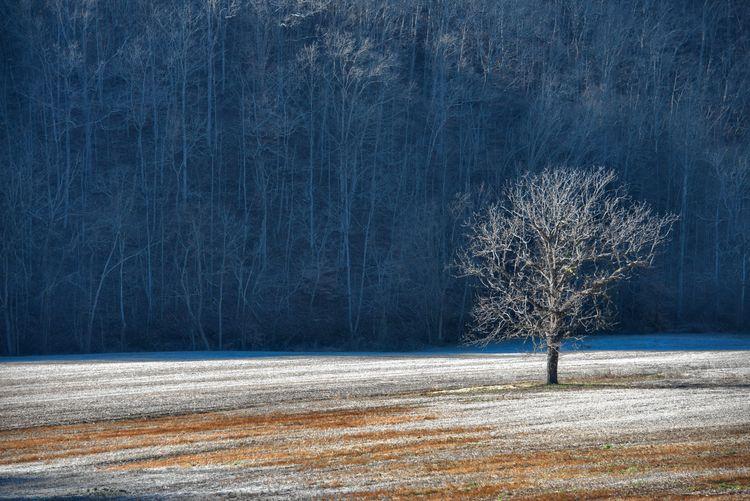 Bare tree on frozen landscape