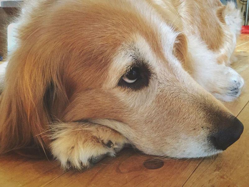 Happy weekend Golden Retriever Dog I Love My Dog EyeEm Gallery EyeEm Best Edits