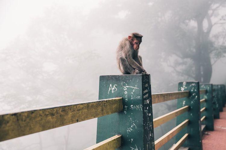Monkey sitting on railing during foggy weather