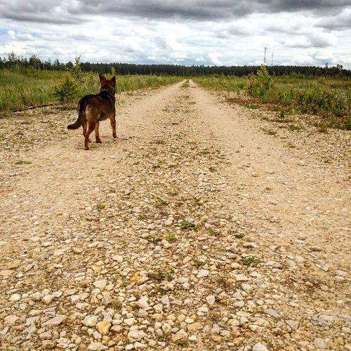 Dog Walking Dog Life Dog Summer Summer ☀ Summertime