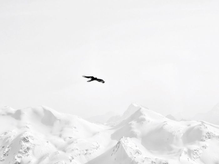 Bird flying over mountain range