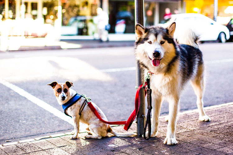 Dogs standing on footpath