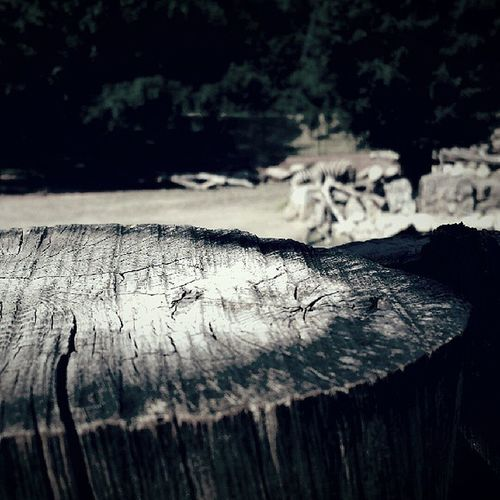 Spuren im Stamm