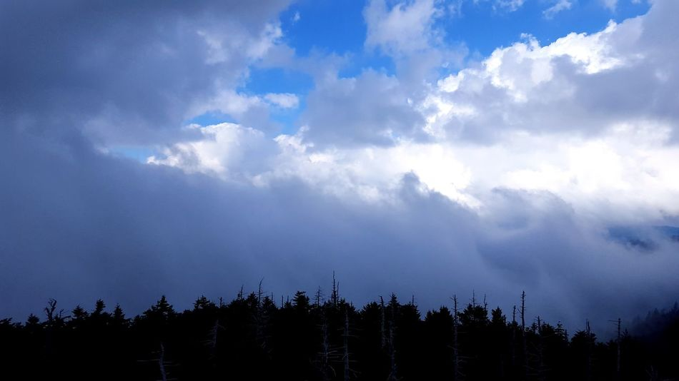 Clingmans Dome Beauty In Nature Cloud - Sky Day Incoming Storm Nature No People Outdoors Scenics Sky Tranquil Scene Tranquility Tree