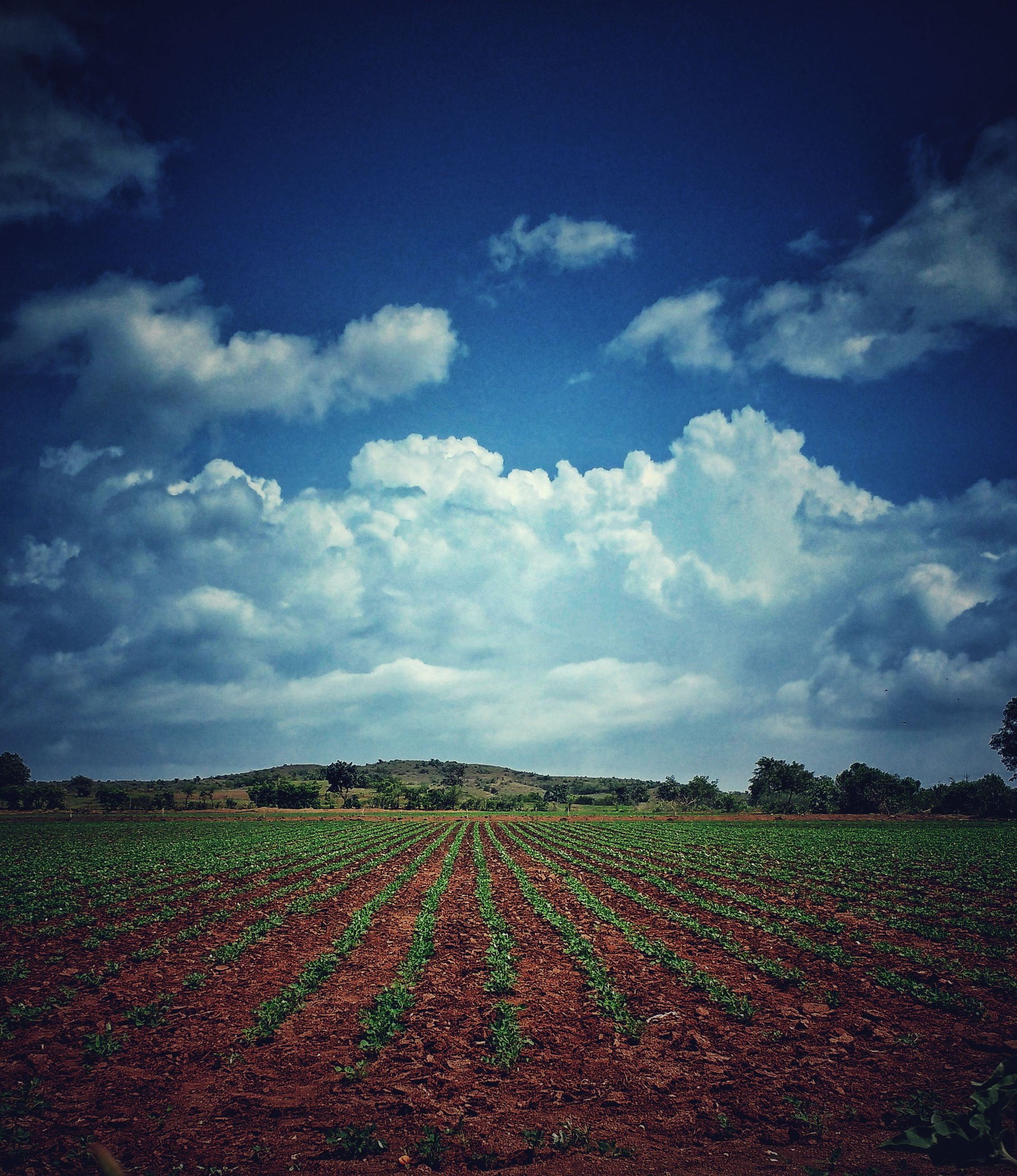 field, agriculture, landscape, cloud - sky, growth, sky, rural scene, nature, beauty in nature, tranquility, day, no people, plough, scenics, outdoors, plowed field