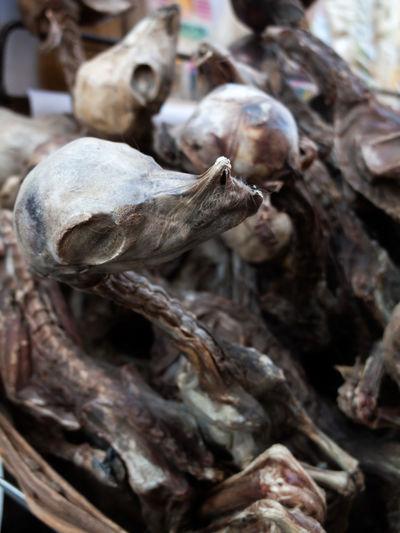 Dead Death Belief Religion Voodoo Sacrifice Sacrifices Pachamama  Llama Lhama Lhamas Alpaca Vicuña Vicuñas Altiplano Highlands Bolivia Desert Mountain Nature No People Landscape Wool Fleece Warm Clothing