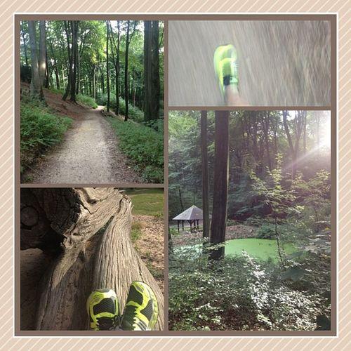 Asics Nimbus15 Wald Fun