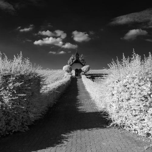 Man walking on snow covered trees against sky