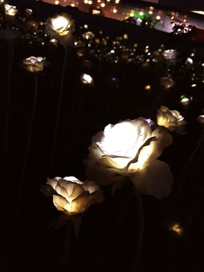 Didn't think this photo was that nice before lol Korea DDP - DongdeamunDesignPlaza Lightflowers Close-up Reminiscing Falling