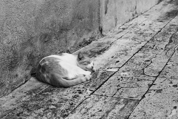 Black And White Friday Domestic Cat One Animal Cat Animal Themes Feline Mammal Domestic Animals Pets Sleeping Relaxation Day No People Sitting Outdoors Close-up