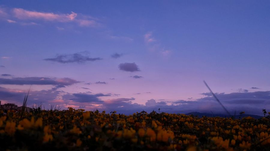 Silhouette plants on field against sky during sunset
