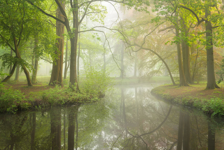 Beautiful misty