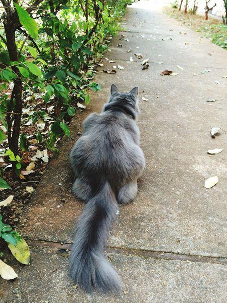 Cats Outdoors Feline Pets