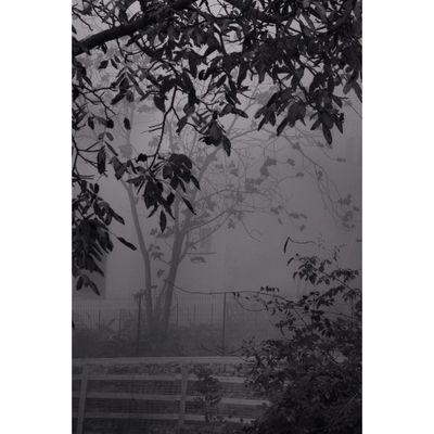 Blackandwhite Monochrome nature fog tree