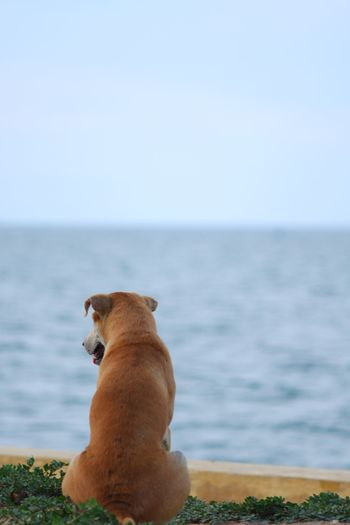 View of a dog looking at sea