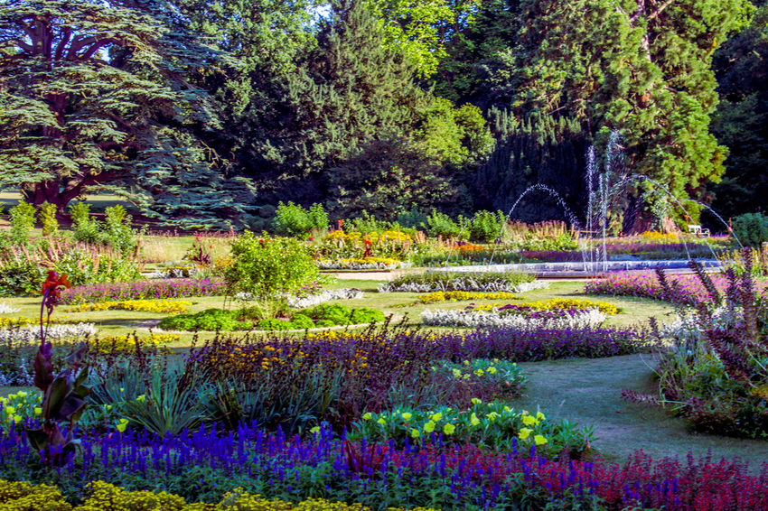 Growth Nature Beauty In Nature Flower Plant No People Outdoors Green Color Scenics Day Multi Colored Tree Grass Flowerbed Water Freshness Gardens Audley End Water Feature The Great Outdoors - 2017 EyeEm Awards