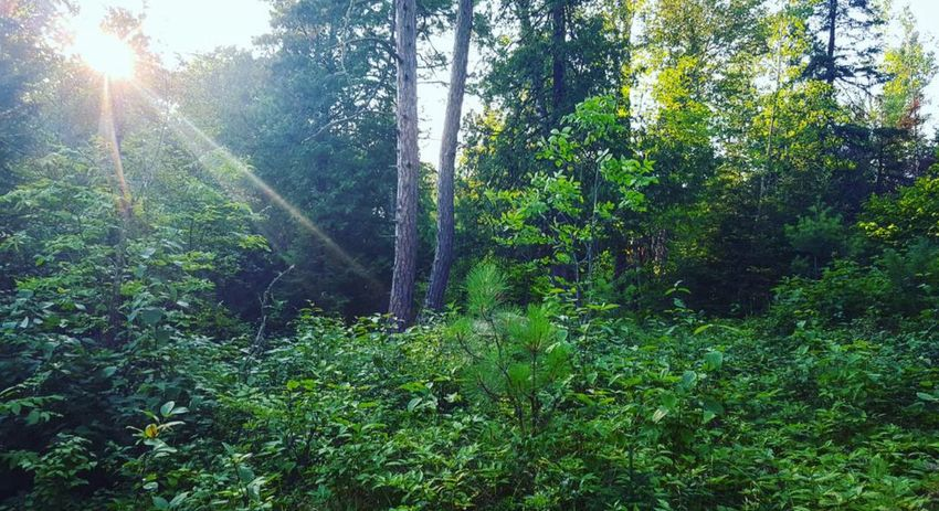 Forest Photography Forest Walk Hikingadventures Off The Beaten Path Hello World Peaceful Minnesota Nature Summertime Therapy For The Soul Wilderness Calling Nature Photography The Woods Out Back Happy Place Exploring Hello World Amateurphotography