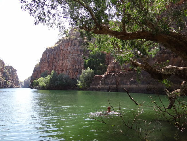 Butterfly Gorge, Nitmiluk National Park, Katherine, Northern Territory, Australia Australia Australian Australian Landscape Kakadu National Park Katherine Katherine Gorge Katherine NT Australia Nitmiluk National Park Northern Territory Beauty In Nature Butterfly Gorge Cliff Day Growth Katherine National Park Lake Land Nature Nitmiluk No People Non-urban Scene Outdoors Plant Rock Formation Scenics - Nature Sky Tranquil Scene Tranquility Tree Water Waterfront