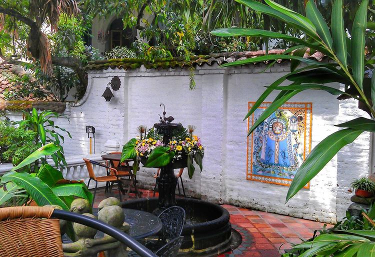 Plant Architecture Day Built Structure No People Outdoors Nature Garden Patio South America Colombia Cali Artist Gallery Cafe