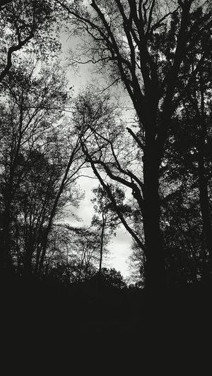 The forest Darkness And Light Light And Darkness  Hugging A Tree EyeEm Nature Lover Eye4photography  Nature_collection Silhouette Monochrome Fortheloveofblackandwhite Trees PLEASE PROMOTE ARTISTIC SKILLS ON EYEEM AND ADOPT A RESPECTFUL BEHAVIOUR