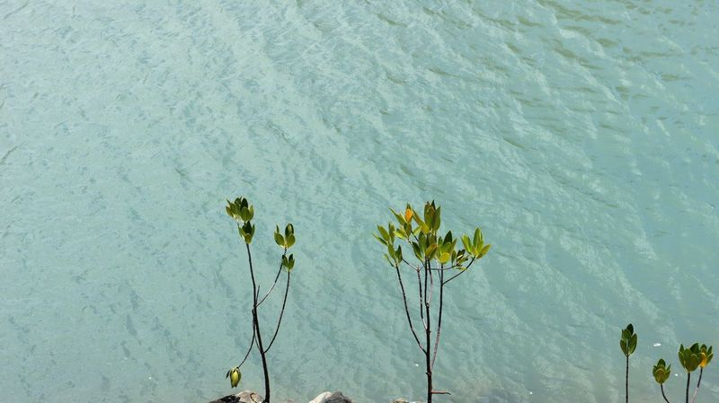 On the edge Green Green Color Green Leaves Growth Long Stem Nature Over The Edge Plant Plants River Plants Riverside Rocks On The Shore Water_collection