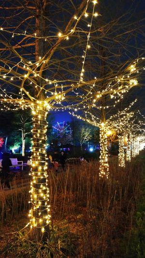 Opening At Night Lighting Lamp Themapark
