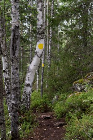 Finland Marker Tree Walk Day Forest Nature No People Outdoors Treck Tree Trunk Waypoint Yellow