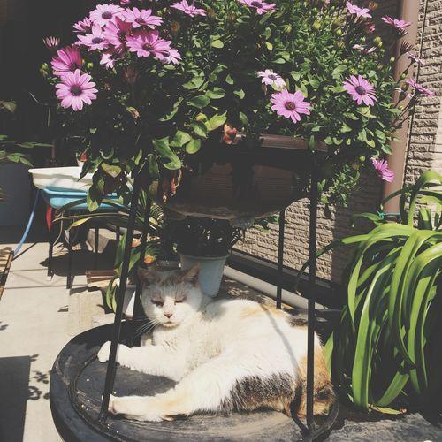 Soaking Up The Sun   猫じゃんは日光を浴びている