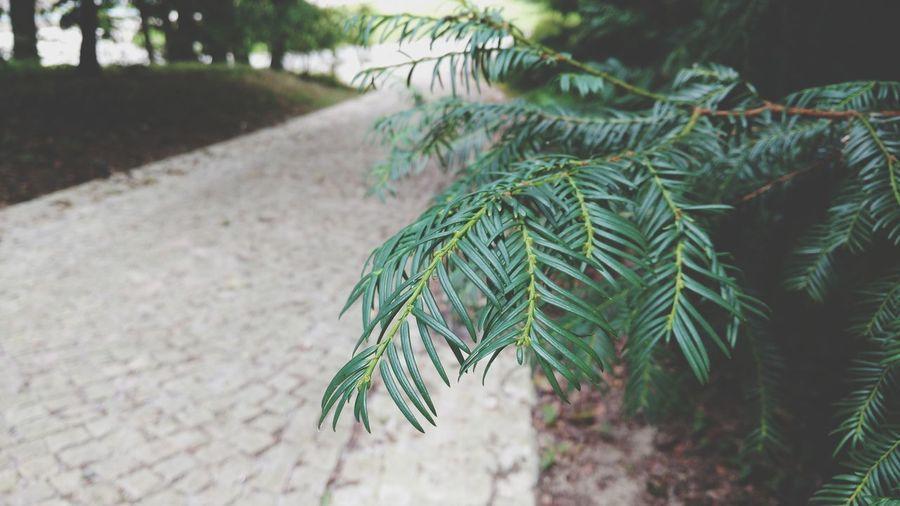 Path Path In