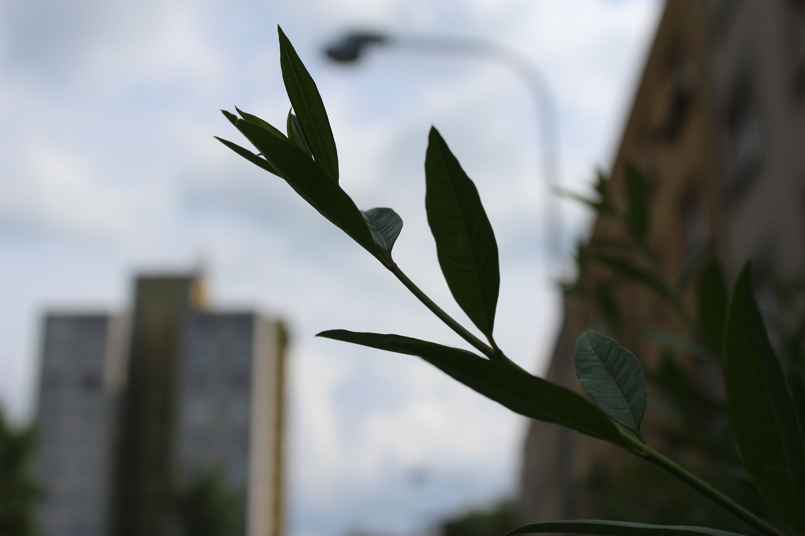 focus on foreground, leaf, growth, close-up, plant, building exterior, sky, built structure, architecture, nature, stem, day, fragility, branch, selective focus, outdoors, no people, twig, freshness, growing