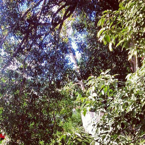 Dotspin Betosalvestrini Art Original Natural Nature Plants Peace Tree Forest Venezuela Sancristobal City - Springs