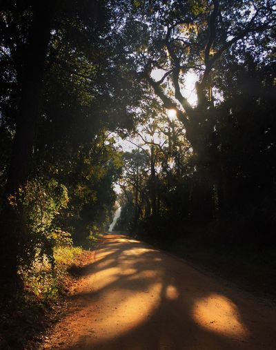 Sun-dappled country road amoung the Live Oak trees. Country Road Sun Dappled Shade Sandy Road Morning Light Morning Trees Live Oak Beauty In Nature Tranquility Nature Sunlight Outdoors Shadow Branch