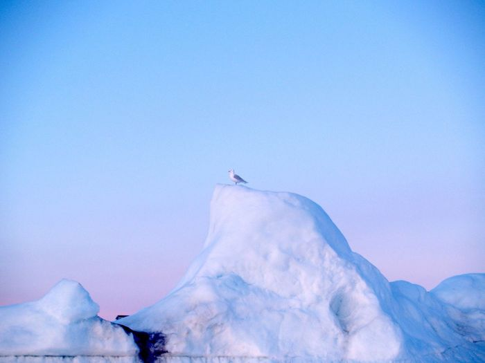 Seagull Perching On Ice Berg Against Clear Sky