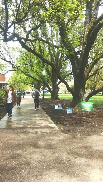 College Collegecampus Tree Trees And Sky Pathway Paved Path People Day Outdoors EyeEmNewHere