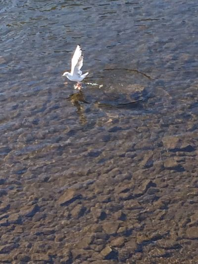 Bird Water Water Bird Flying Ios Perfect Timing