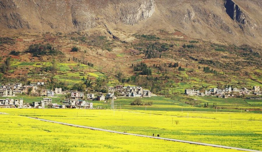 a fictitious land of peace Scenics Mountain House Field Tranquil Scene Agriculture Beauty In Nature