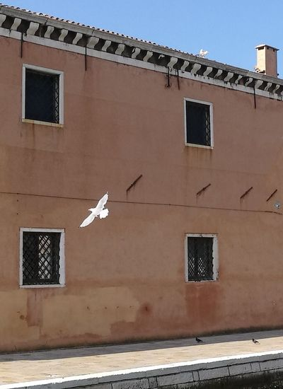 Seagull No People Building Exterior Window Day Sky Outdoors Architecture