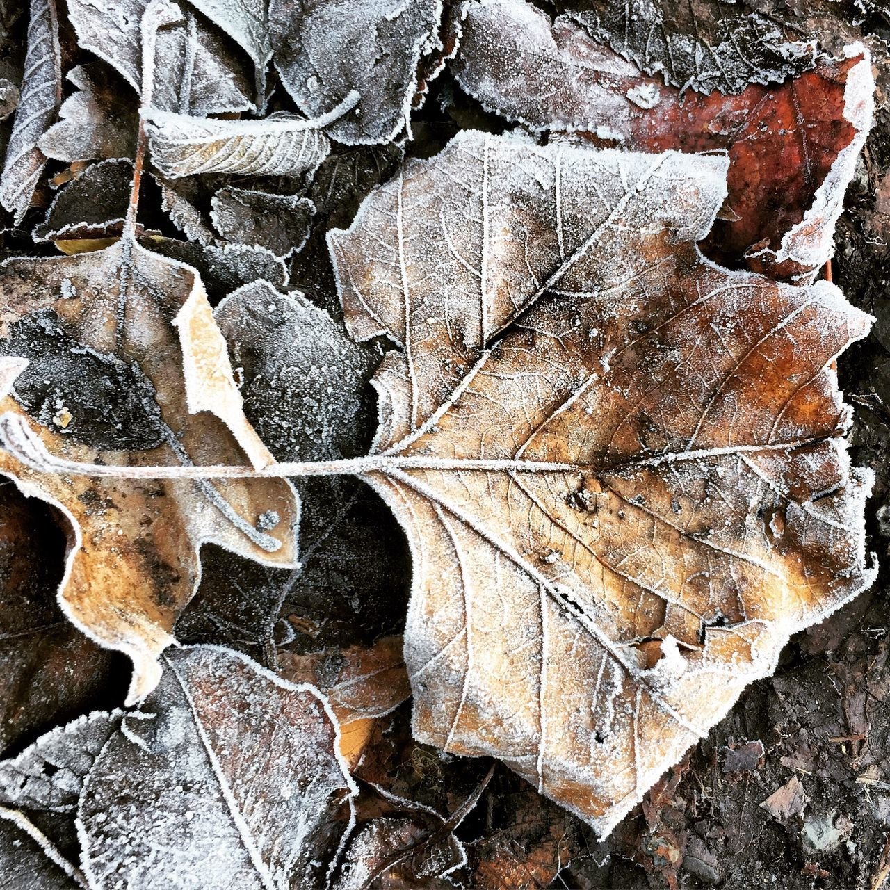 leaf, autumn, no people, change, full frame, nature, backgrounds, fragility, close-up, day, outdoors